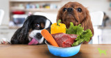 Volhard Dog Nutrition 101: Determining Which Food Is Best For Your Dog (Part I)