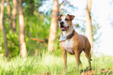 Dogs Suffer From Tick Bites Too: 5 Strategies to Effectively Prevent ticks from latching on and how to remove them if they do!