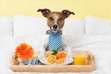 Vitamin C for a Happy and Healthy Dog