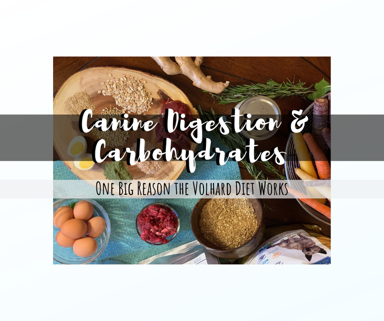 Canine Digestion and Carbohydrates - One Big Reason the Volhard Diet Works