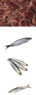 fish-verticle-krill-400.png