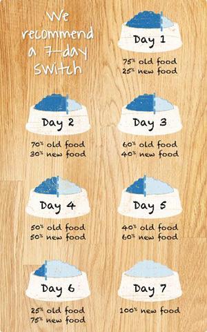 how-to-change-dog-food.jpg