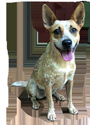 rescue-5-petunia-a.png