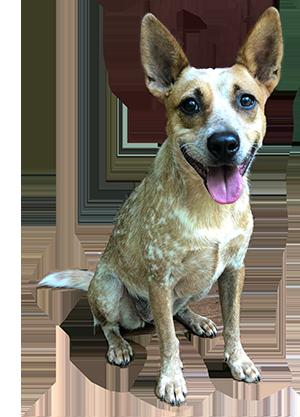 rescue-5-petunia.png