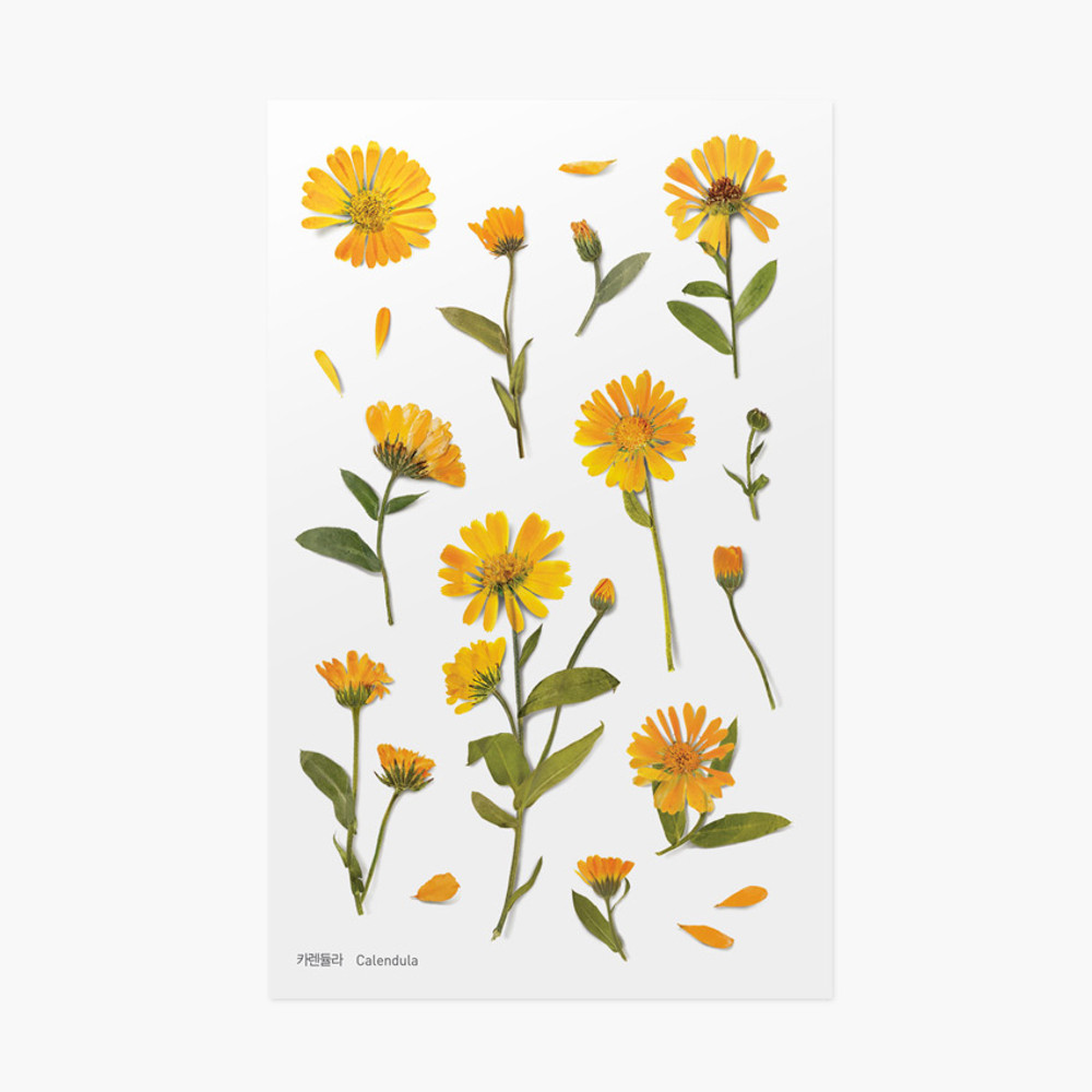 Appree Calendula press flower deco sticker