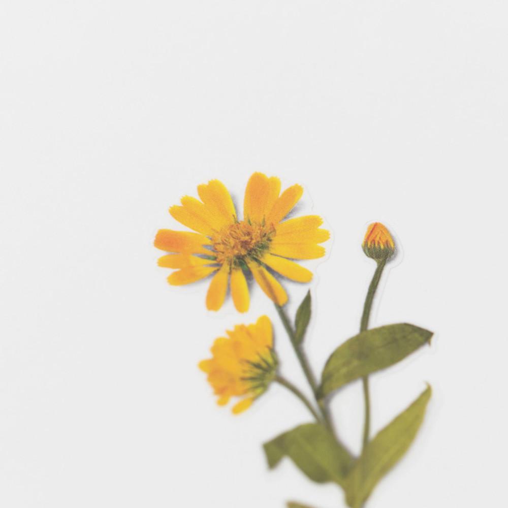 Detail of Appree Calendula press flower deco sticker