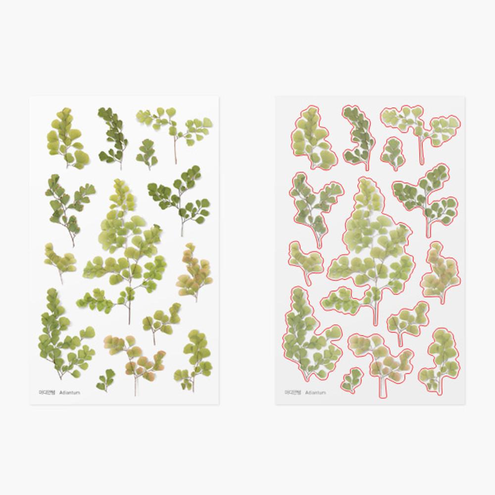 Appree Adiantum pressed flower deco sticker