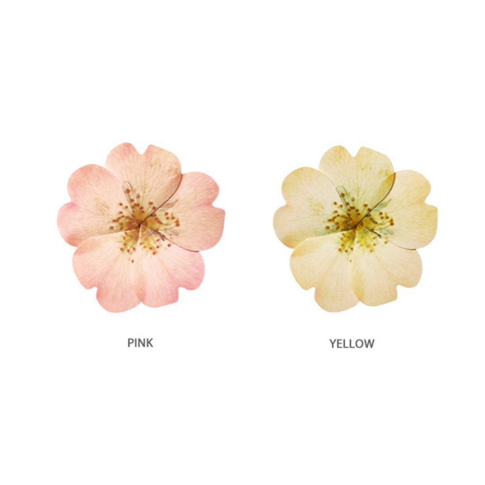 Color - ABJECTION Wild Rose card and envelope set