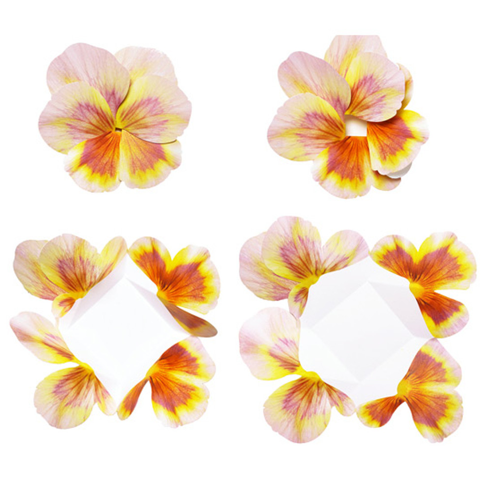 Ivory - ABJECTION Pansy flower card and envelope set ver2