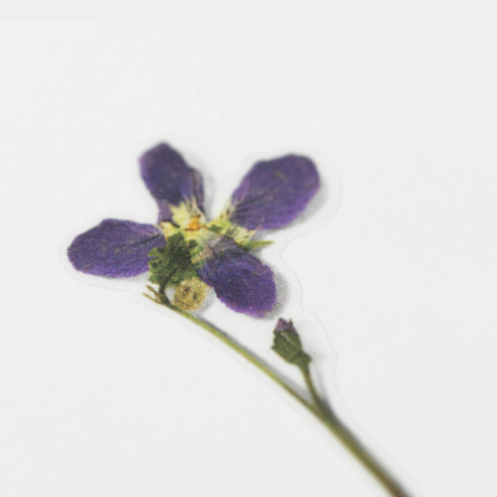 Appree Manchurian violet press flower stickers