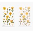 Cutting line - Appree Calendula press flower deco sticker