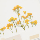 Usage example - Appree Rapeseed flower pressed deco sticker