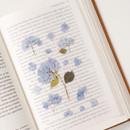 Usage example - Appree Bigleaf hydrangea pressed flower sticker