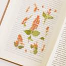 Appree Salvia pressed flower sticker