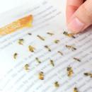 Appree Honeybee nature clear sticker