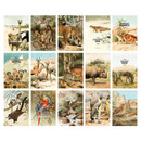 Composition of Nature animal picture postcard set