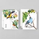 Bird illustration card set