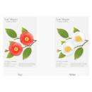Colors of Camellia leaves magnet set