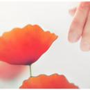 Poppy magnet set