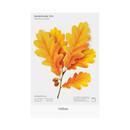 Yellow - Appree Acorn leaves bookmark black ballpoint pen set