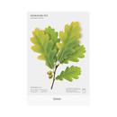Green - Appree Acorn leaves bookmark black ballpoint pen set
