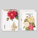 Flower illustration card set