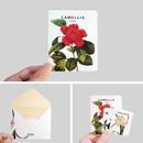 Detail of Flower illustration card set ver.4