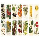 Composition of Fruits bookmark set