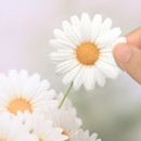 Daisy large sticky memo notes