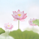 Lotus small sticky memo notes