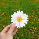 ABJECTION Daisy cards and envelope set