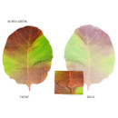 Red-green - ABJECTION Tree leaf 3 cards set