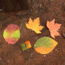 ABJECTION Tree leaf 3 cards set