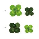 Option - ABJECTION Four leaf clover cards and envelope se