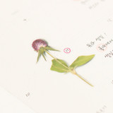 Usage example - Appree Globe amaranth pressed flower deco sticker