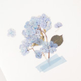Appree Bigleaf hydrangea pressed flower sticker