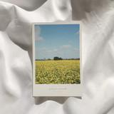 Meri Film Jeju travel postcard 4 sheets set