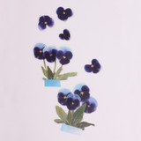 Appree Pansy pressed flower sticker