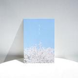 Cherry blossom - Meri Film Spring flowers post card