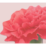 Red - Appree Carnation magnet set