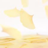 Ginkgo leaf transparent sticky memo notes Large