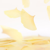 Ginkgo leaf transparent sticky memo notes Large