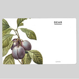 Vintage fruits illustration card set