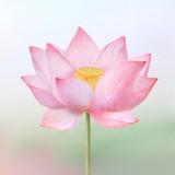 Lotus medium sticky memo note