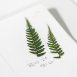 Detail of Bracken press flower deco sticker