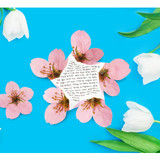ABJECTION Apple blossom cards and envelope set