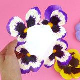 Example of use - ABJECTION Pansy flower card and envelope set
