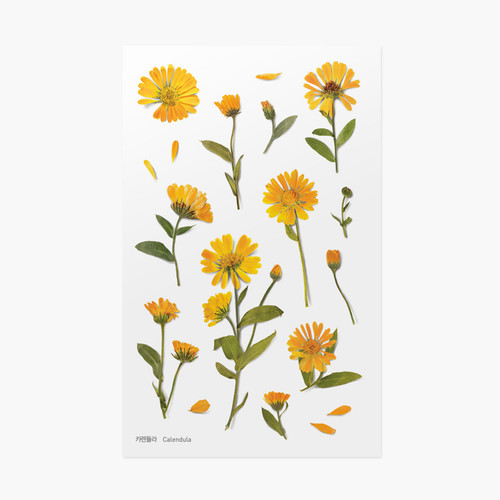 Appree Calendula press flower deco sticker