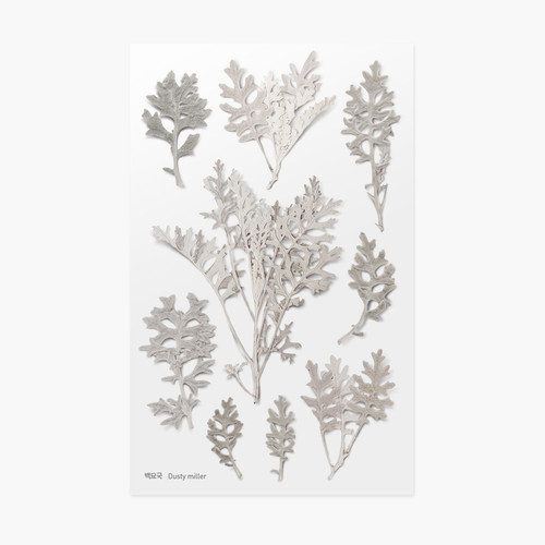 Dusty miller press flower deco sticker