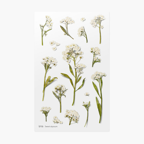 Sweet alyssum press flower deco sticker